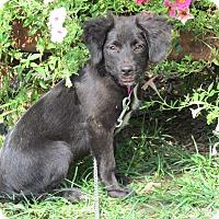 Adopt A Pet :: AUBREE - Bedminster, NJ