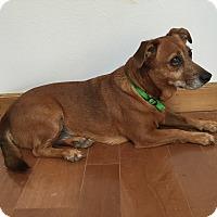 Adopt A Pet :: Molly - Hohenwald, TN