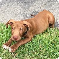 Adopt A Pet :: Peanut - Ellaville, GA
