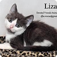 Adopt A Pet :: Liza - Ortonville, MI