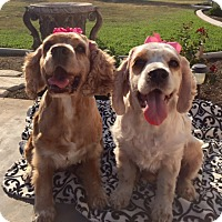 Adopt A Pet :: Lili & Luna - Santa Barbara, CA