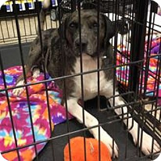 Hound (Unknown Type) Mix Dog for adoption in Lexington, Kentucky - Max