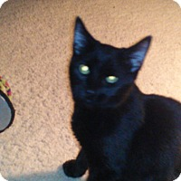 Adopt A Pet :: Four - Alamo, CA