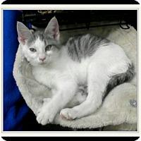 Adopt A Pet :: Snap Chat - Trevose, PA