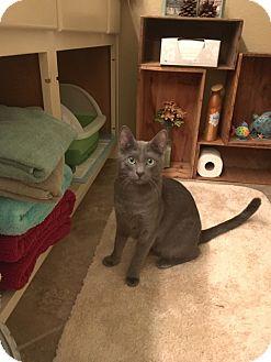 Cat Adoption Modesto