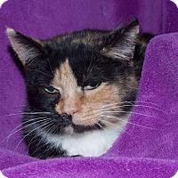Adopt A Pet :: Tala - Ortonville, MI