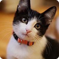 Adopt A Pet :: Jimmy Capes - Alameda, CA