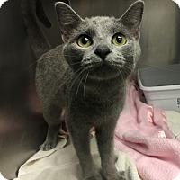 Adopt A Pet :: Houdini - Paducah, KY