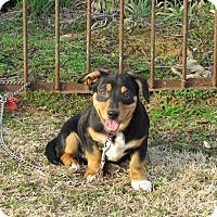 Adopt A Pet :: JOVIE - Bedminster, NJ