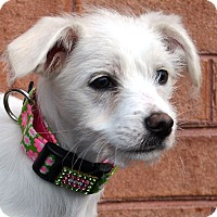 Adopt A Pet :: Paisley - Bridgeton, MO