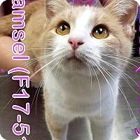 Adopt A Pet :: Damsel - Tiffin, OH
