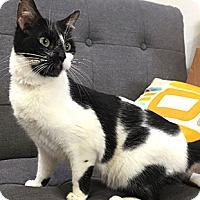 Adopt A Pet :: Lovebug - Oakland, CA