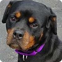 Adopt A Pet :: Hannah - Hillsboro, NH