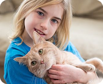 Domestic Shorthair Cat for adoption in Chicago, Illinois - Meowzer