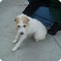 Adopt A Pet :: Cup Cake - Orange Cove, CA