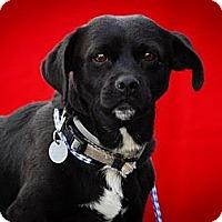 Adopt A Pet :: Otis - Los Angeles, CA