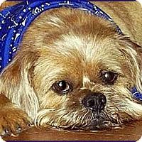 Adopt A Pet :: SIMON - ADOPTION PENDING - Cumming, GA