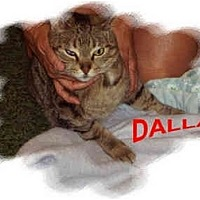 Adopt A Pet :: Dallas - Jacksonville, FL