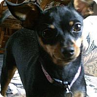 Adopt A Pet :: Suzi Adoption Pending - Nine Mile Falls, WA