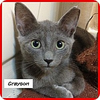 Adopt A Pet :: Grayson - Miami, FL