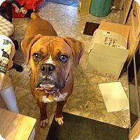 Adopt A Pet :: Zeus - Westminster, MD