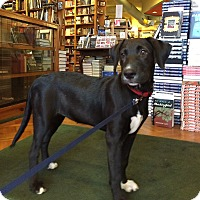 Adopt A Pet :: Willa - Charlemont, MA