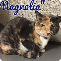 Adopt A Pet :: Magnolia - Arlington/Ft Worth, TX