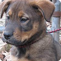 Adopt A Pet :: Butch Cassidy - Bedminster, NJ