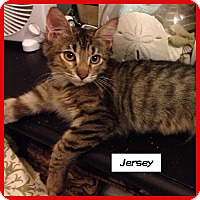 Adopt A Pet :: Jersey - Miami, FL