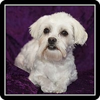 Adopt A Pet :: Eve - San Diego, CA