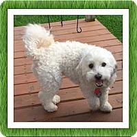 Adopt A Pet :: Adopted!!Monte - TX - Tulsa, OK