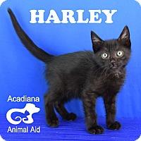 Adopt A Pet :: Harley - Carencro, LA