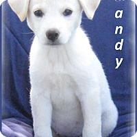 Adopt A Pet :: Mandy - Marlborough, MA