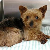 Adopt A Pet :: Ciabatta - Newark, DE