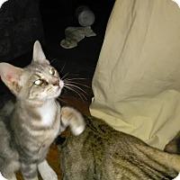 Adopt A Pet :: Mesha - Parkton, NC