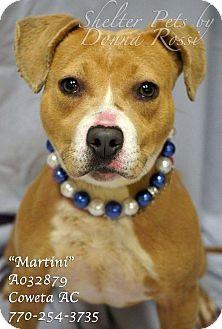 Beagle Mix Puppy for adoption in Newnan City, Georgia - Martini