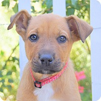 Adopt A Pet :: Minogue von Portia - Thousand Oaks, CA