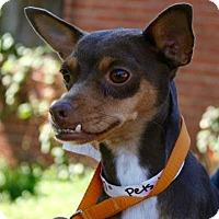 Adopt A Pet :: Jenni - Sugarland, TX