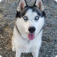 Adopt A Pet :: Molly - Lompoc, CA