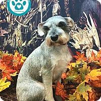 Adopt A Pet :: Wendy - Kimberton, PA