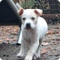 Adopt A Pet :: Atlas - Birmingham, AL