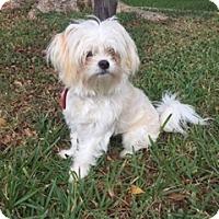 Adopt A Pet :: Tofu - Davie, FL