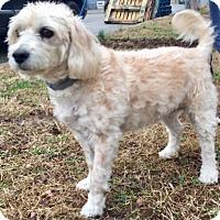 Adopt A Pet :: Ripley - Oswego, IL