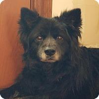 Adopt A Pet :: Baxter - Sparta, NJ