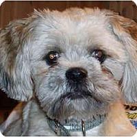 Adopt A Pet :: Jada - Mays Landing, NJ