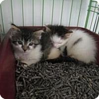 Adopt A Pet :: Sophia & Jerry - Island Park, NY