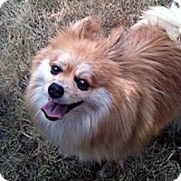 Adopt A Pet :: REBA - Kokomo, IN