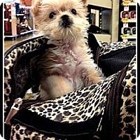 Adopt A Pet :: Sherman - Silsbee, TX