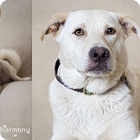 Adopt A Pet :: Tahoe & Aspen - Phoenix, AZ