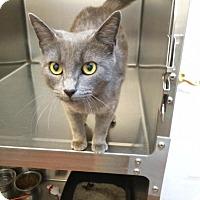 Adopt A Pet :: Ivanna - McDonough, GA